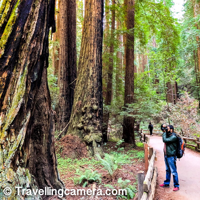 I loved walking around the Muir Woods National Monument and enjoyed clicking photographs. Now that I am familiar with the terrain and the route, it should be easy for me to plan another visit during summer.