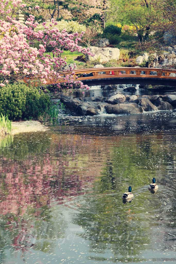 If you can't visit Japan for Hanami, Vienna's Setagaya Park is a good substitute. The park has a pond, home to mandarin ducks, carps, and turtles.
