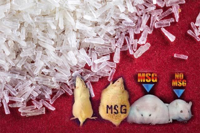 Monosodium Glutamate (MSG) merupakan salah satu jenis penyedap rasa yang sering ditambahkan ke dalam makanan. Dibalik manfaatnya menyedapkan makanan, penyedap yang biasa ada pada kuliner china ini juga bisa berdampak buruk bagi kesehatan bahkan bisa mengakibatkan keracunan.