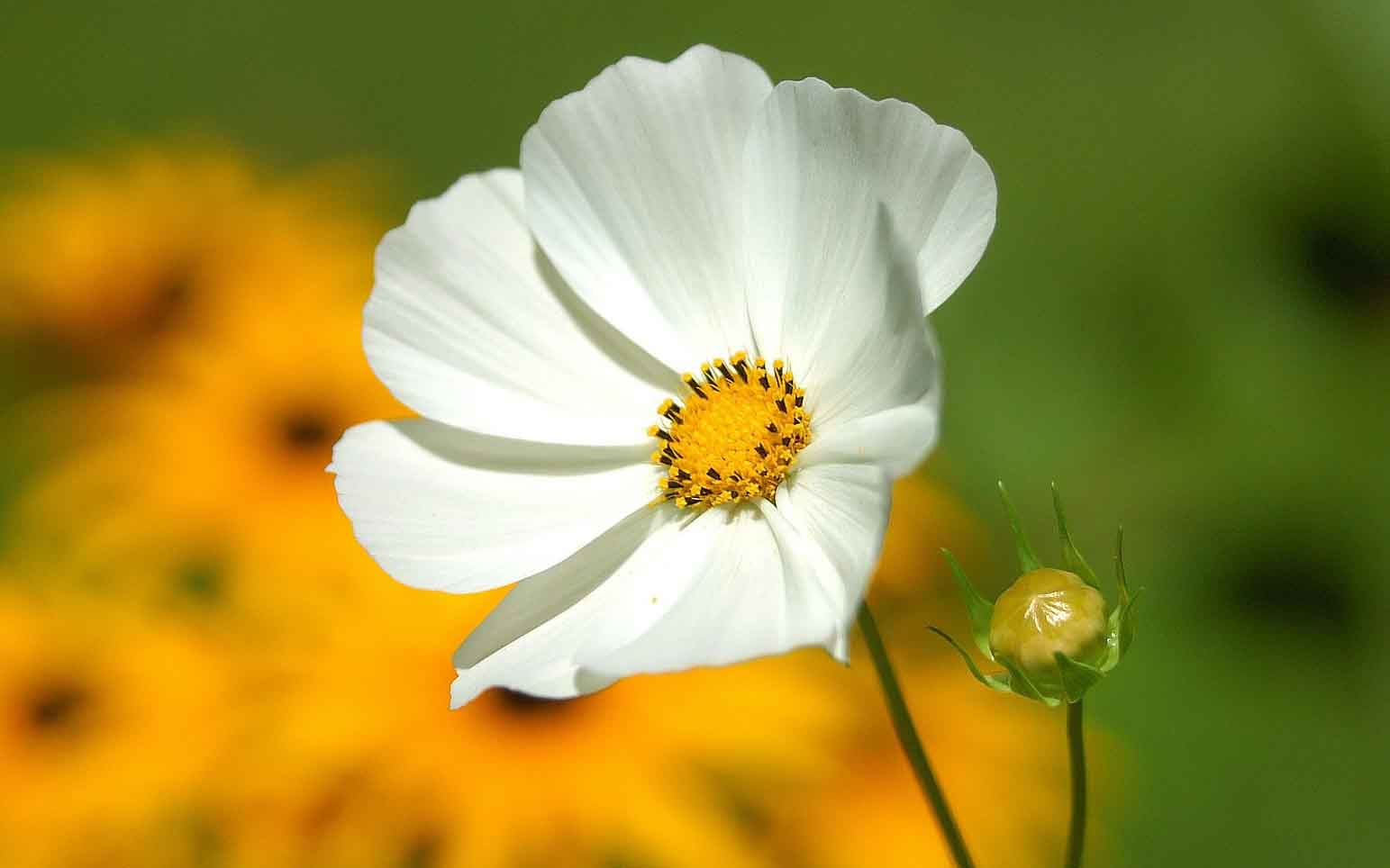whatsapp flower images