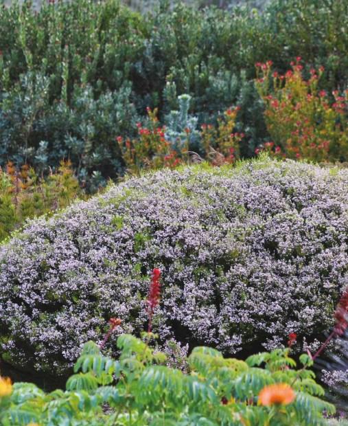 beautiful flower, garden, soil, backyard