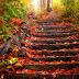 Ağır Ağır Çıkacaksın Bu Merdivenlerden