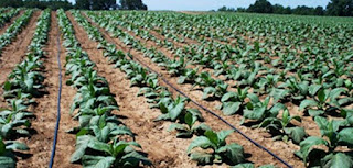 Drip Irrigation and farming