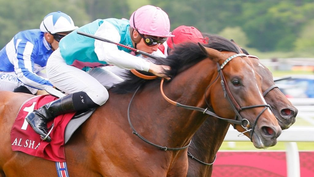 QIPCO Irish Champion Stakes 2019 - Preview