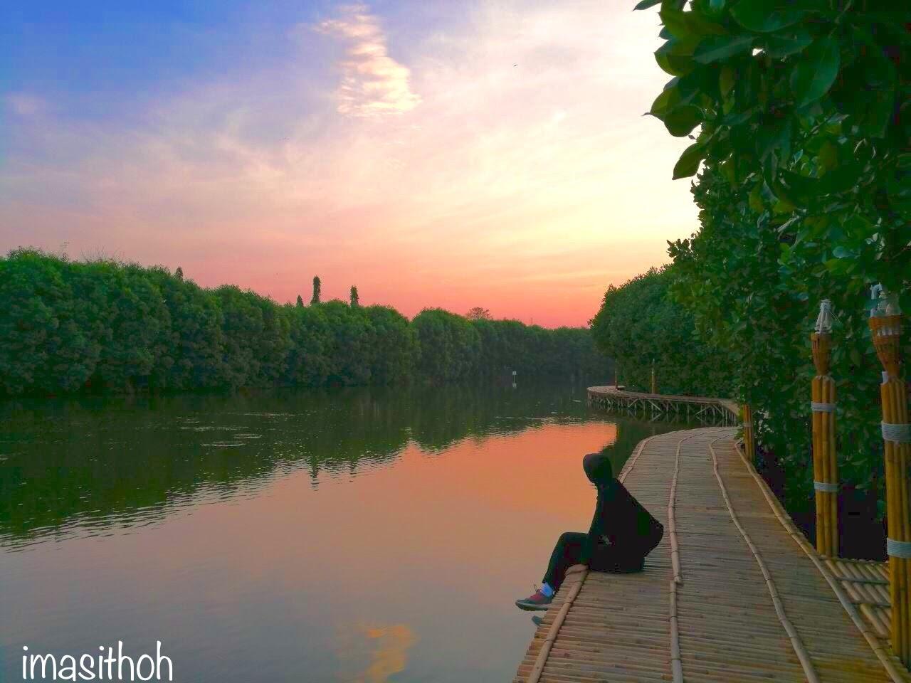 Mangrove PRPP Jawa Tengah