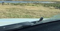 شاهد بالفيديو شاهد ثعبان يخرج من تحت غطاء محرك سيارة