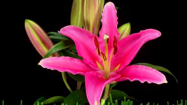 hình ảnh hoa đẹp nhất thế giới 18