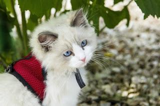 صور صور حيوانات اليفة 2019 خلفيات حيوانات جميلة kitten_cat_cats_anim