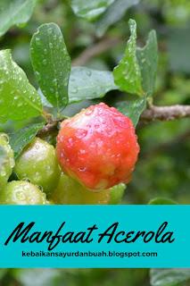 buah acerola