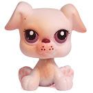 Littlest Pet Shop Multi Packs Boxer (#437) Pet