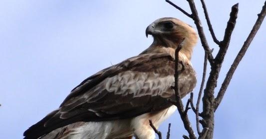 Sunshinecoastbirds Durikai State Forest Coolmunda Lake Western Queensland Part Iv