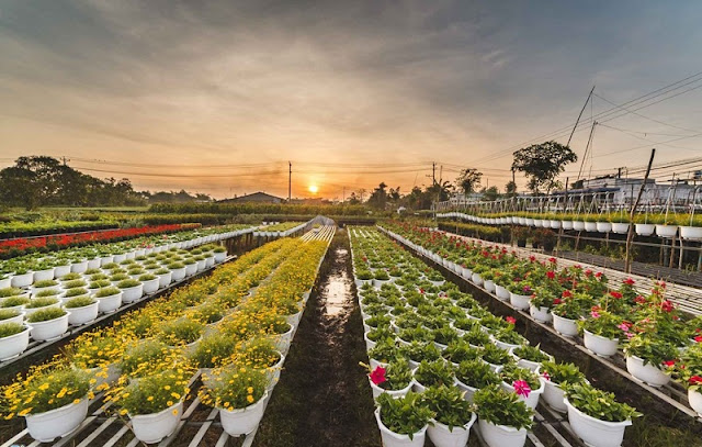 Thousands of flower pots prepared for Tet holidays