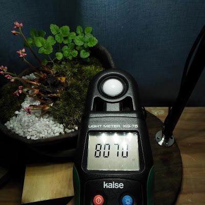 植物鑑賞スタンドの照度