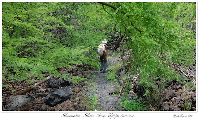 Honomalino: Kiawe Green. Uplifts dark lava.