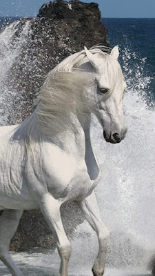 horse iPhone 6 plus live wallpaper