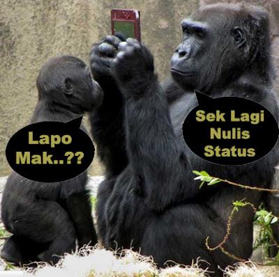 gambar 2 gorila gokil banget
