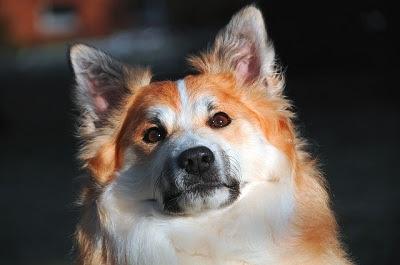 behawiorysta dla psów zielona Góra