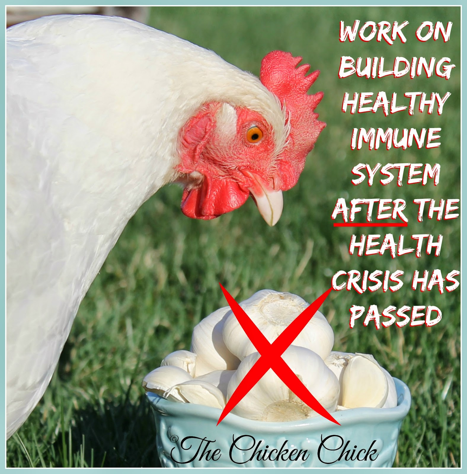 If herbal or other dietary supports have not already been a part of a chicken's regular routine, they should not be offered during an illness. Work on building a healthy immune system after the chicken's health crisis has passed.