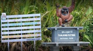 Wisata Taman Nasional Tanjung Puting