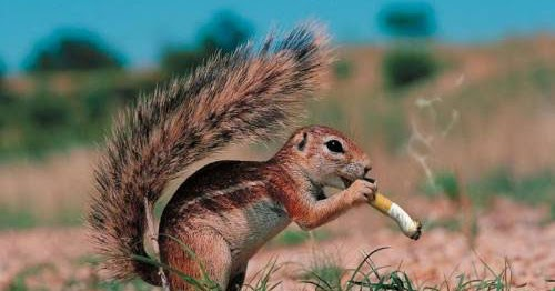 Smoking Animals Funny Pictures Funny And Cute Animals