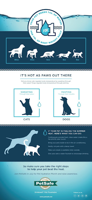 What to do if your pet was dehydrated. INFOGRAPHIC