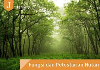 Hutan yang ditumbuhi berbagai macam tumbuhan.
