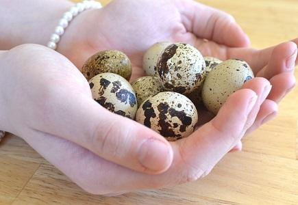 Bıldırcın Yumurtası Protein Oranı