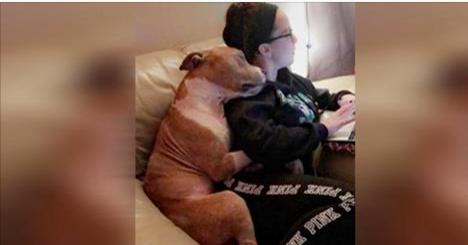 Cette femme regarde dans un box et découvre un chien maltraité. Ce qu'il fait depuis qu'elle l'a ramené chez elle est bouleversant. Juste magnifique.