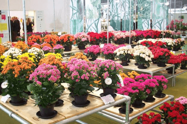 macam-macam tanaman hias