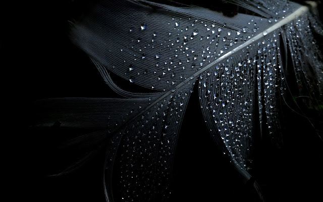 Black Background Wallpapers First Hd Wallpapers
