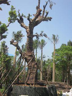 Kết quả hình ảnh cho cây đa công trình