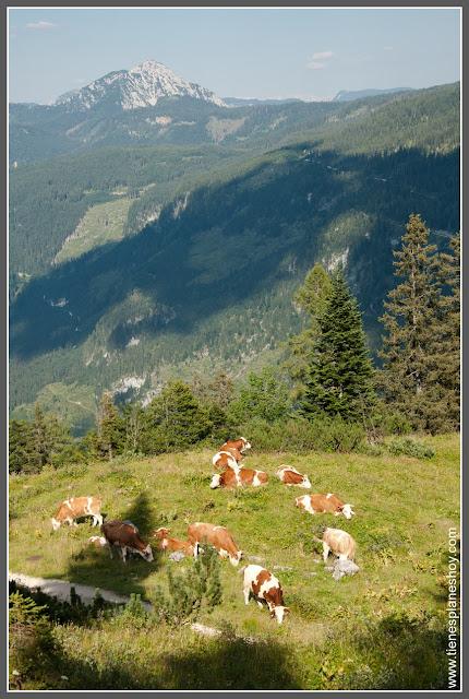 Telecabina Gosausee (Austria)