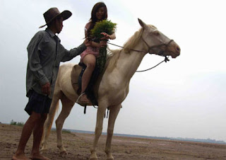 Tất tần tật về cưỡi ngựa