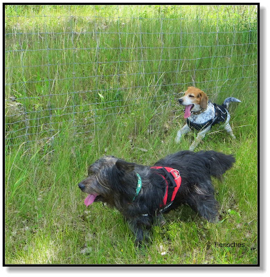 Emma und Lotte - zwei Hunde die zusammen gehören