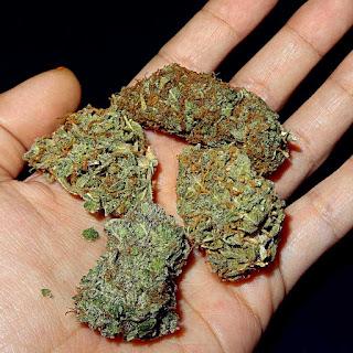 Aseguran más de 100 kilos de mariguana en Sonora hay un detenido