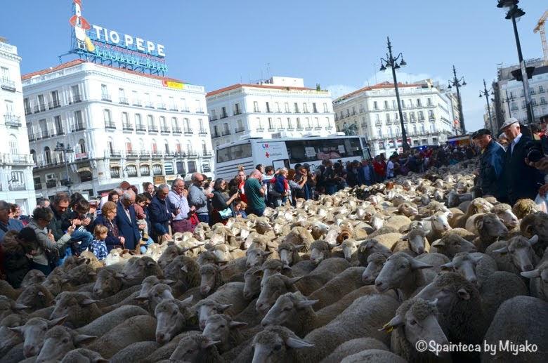 Fiesta de la Trashumancia Madrid  1500頭を超えるひつじの群れを眺める人々
