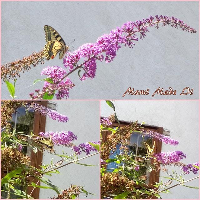 Swallowtail - Schwalbenschwanz
