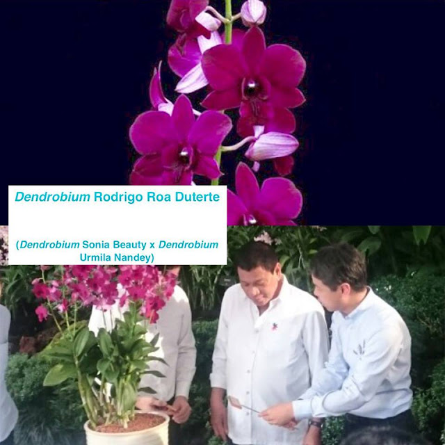 Singaporean Orchid To Be Named After President Duterte To Honor Him.