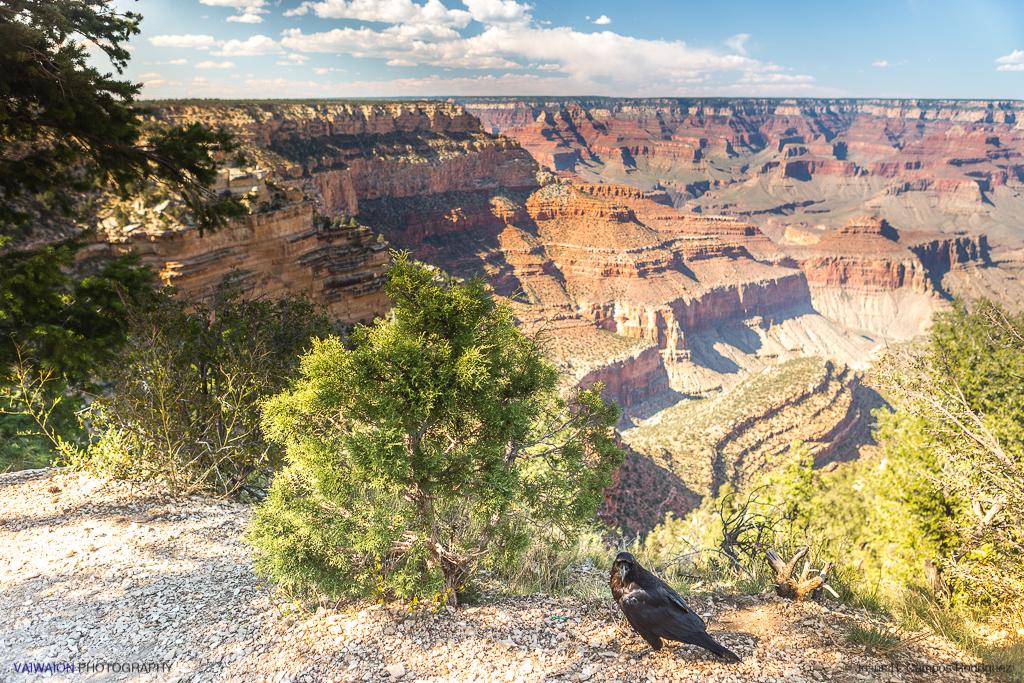 Cuervo y el Gran Cañón. Gran Cañón del Colorado.