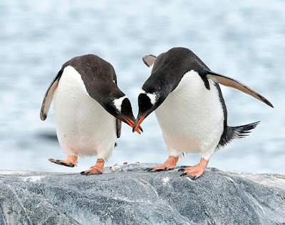 2 pinguin
