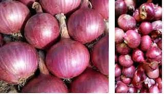 bawang merah varietas bima brebes