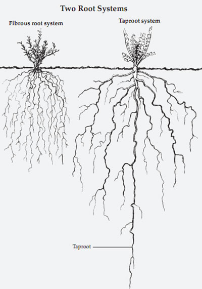 Plant Life: Roots
