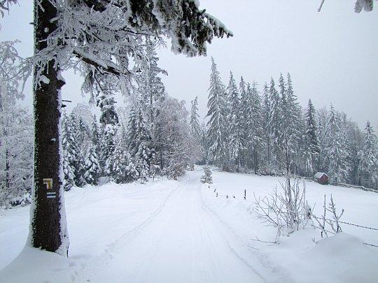 Droga, którą biegnie niebieski szlak przez Kobylą (widok z przełęczy Kobyla Sałasz).