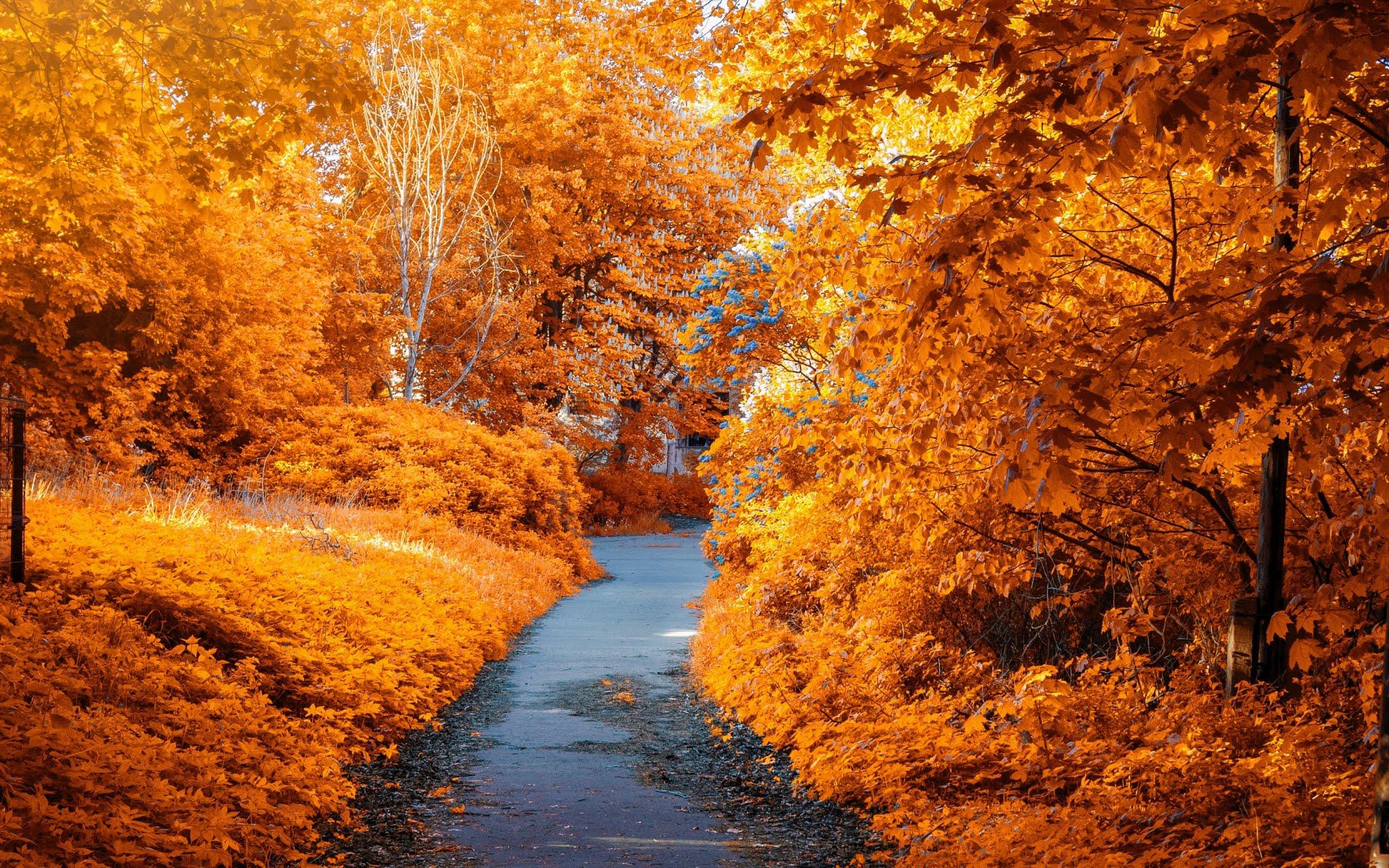 Paisagem Outono no Parque