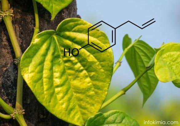 kandungan kimia dalam daun sirih