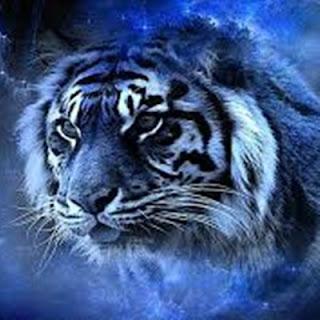 Jasa Pengisian Khodam Harimau Putih