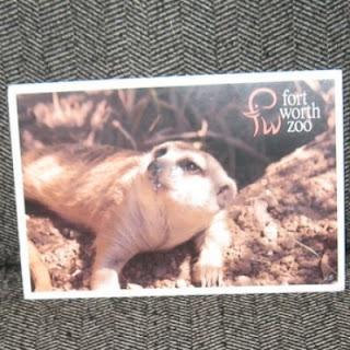meerkat magic