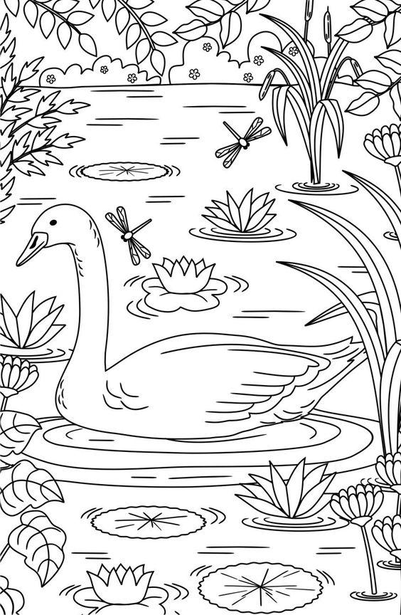 Tranh tô màu con thiên nga trong hồ sen