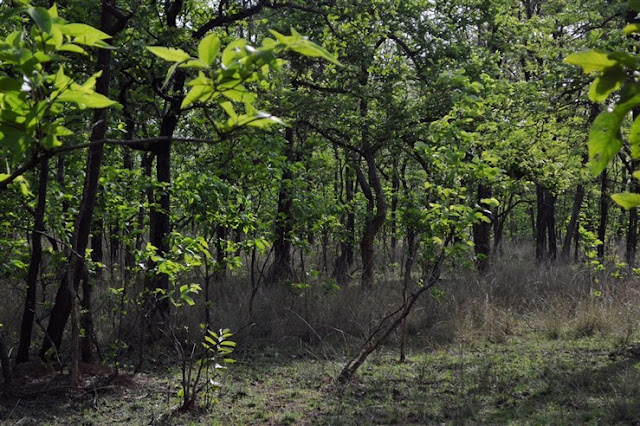 safari Bandhavgarh National Park and Tiger Reserve