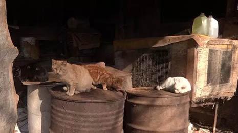 Neglect In Animal Care Facilities